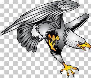 Bald Eagle Symbol Illustration PNG