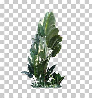 Leaf Plant Tree Shrub Flowerpot PNG