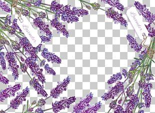 Romantic Lavender Decorative Box PNG