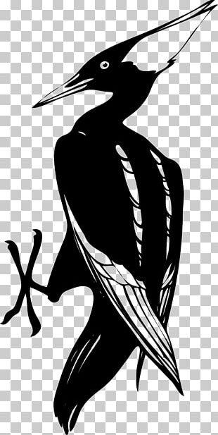 Woody Woodpecker Ivory-billed Woodpecker PNG