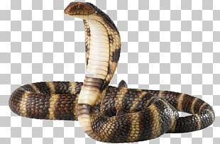 Snake King Cobra PNG