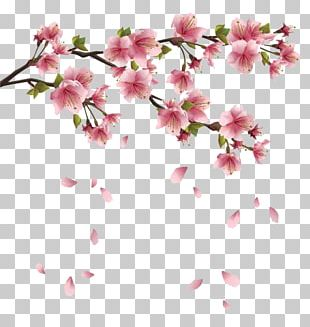 Spring Flowers Branches PNG