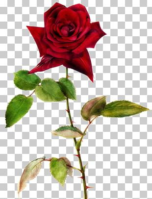 Rose Valentines Day Greeting Card Idea Heart PNG