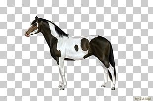Stallion Mustang Rein Mare Horse Harnesses PNG