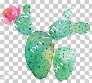 Cactaceae Flower Succulent Plant Watercolor Painting PNG