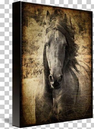 Friesian Horse Mustang Stallion Mane Pony PNG