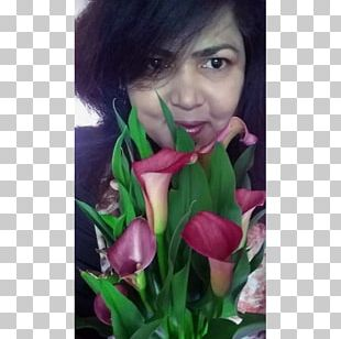 Tulip Floral Design Rose Family Petal PNG