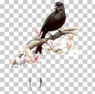 Drawing Birds 百鳥圖 Birds And People Painting PNG