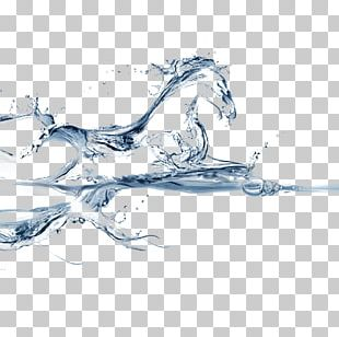 Water Horse PNG