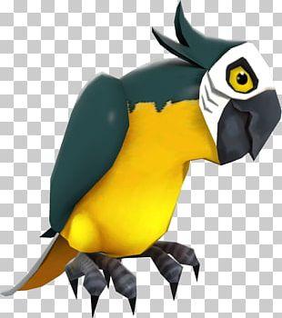 Macaw Beak Fauna Toucan Cartoon PNG