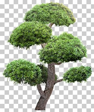 Tree Garden Landscape Greening PNG