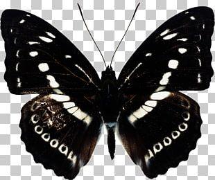 Butterfly Gaussian Blur PNG