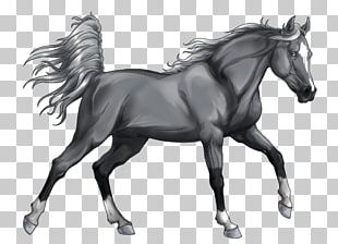 Stallion Arabian Horse Mongolian Horse Grayscale Mustang PNG
