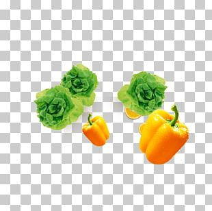 Bell Pepper Vegetable Chili Pepper Cabbage PNG
