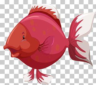 Fish Anatomy PNG