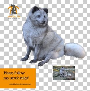 Norwegian Elkhound Snout Dog Breed Fur PNG