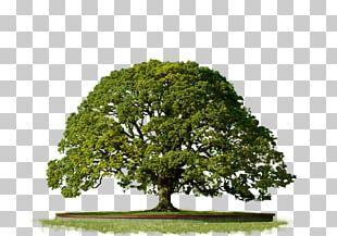 Tree Computer Icons Geni PNG