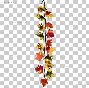 Twig Floral Design Leaf Plant Stem PNG