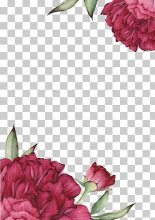 Centifolia Roses Flower Drawing PNG