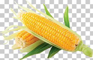 Corn On The Cob Popcorn Flint Corn Sweet Corn PNG