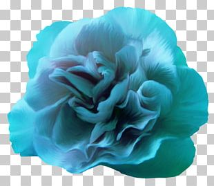 Blue Rose Blue Rose Flower Color PNG