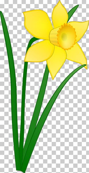 Daffodil Free Content Drawing PNG