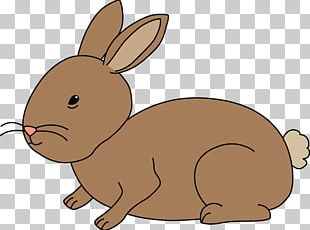 Netherland Dwarf Rabbit PNG