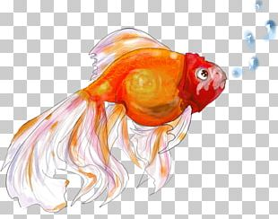 Goldfish Drawing Bony Fishes Marine Biology PNG