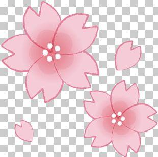 Illustrator Cherry Blossom Food The Machine Man PNG
