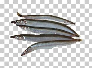 Sardine Pacific Saury Fish Products Anchovies As Food Oily Fish PNG