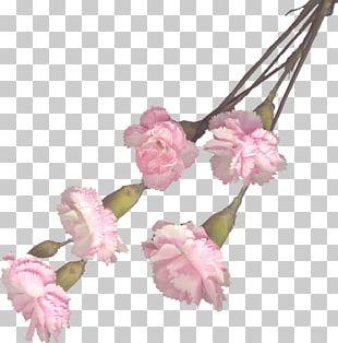 Cut Flowers Carnation Floral Design Artificial Flower PNG