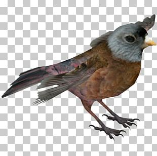 Zoo Tycoon 2 Finches American Sparrows Beak PNG