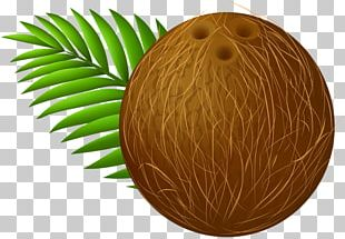 Coconut Milk PNG