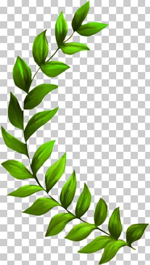 Seagrass Plant Seaweed PNG