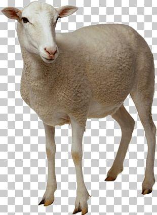 Sheep Goat PNG