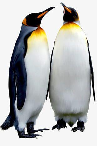 Black Emperor Penguin PNG