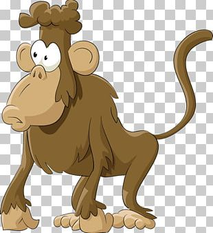 Mandrill Hamadryas Baboon Monkey PNG