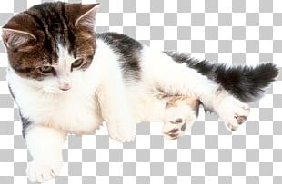 Cat Online Chat Kitten Fond Blanc Craft Magnets PNG
