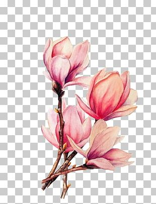 Watercolor Painting Tattoo Drawing Magnolia PNG