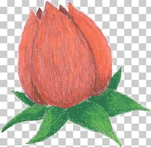 Bud Flower Petal PNG