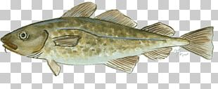 Atlantic Cod Fish Products Oily Fish PNG