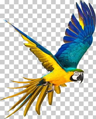 Parrot Bird Blue-and-yellow Macaw Stock Photography PNG