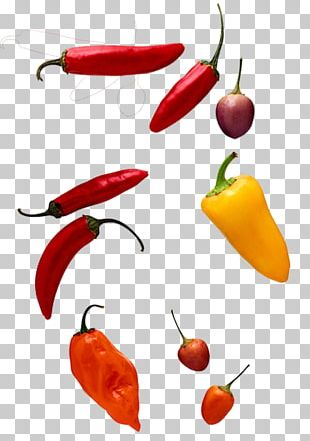 Chili Pepper Computer File PNG