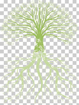 Family Tree Root Tree Of Life PNG