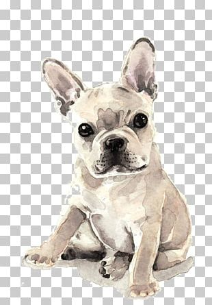 French Bulldog Puppy Watercolor Painting Fawn PNG
