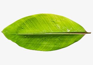 Hawaii Banana Leaves PNG