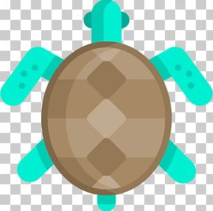 Tortoise Sea Turtle PNG