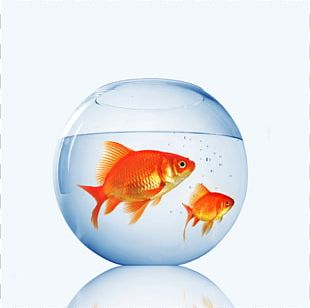 Goldfish Aquarium Fishkeeping Pet Shop PNG
