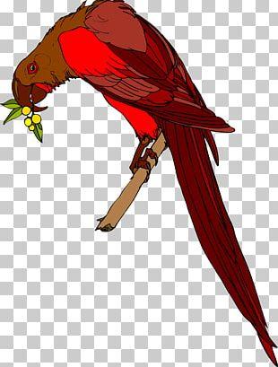 Macaw Beak Feather Wing Loriini PNG