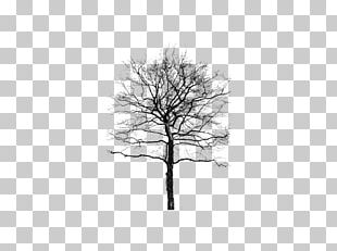 Woody Plant Tree PNG